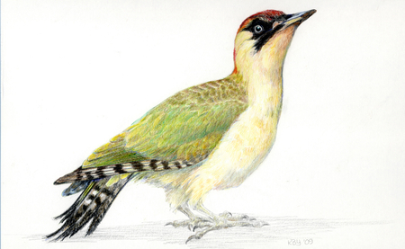 Green Woodpecker (2008) by Kirsten Bomblies